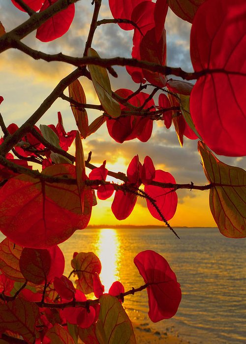 Beach Greeting Card featuring the photograph Glowing Red by Stephen Anderson