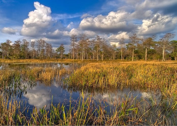 Clouds Greeting Card featuring the photograph Golden Grasses by Debra and Dave Vanderlaan
