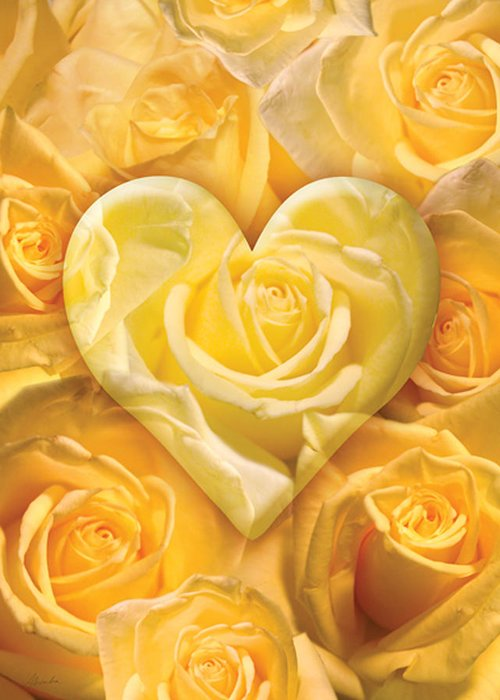 Alixandra Mullins Greeting Card featuring the photograph Golden Heart Of Roses by Alixandra Mullins