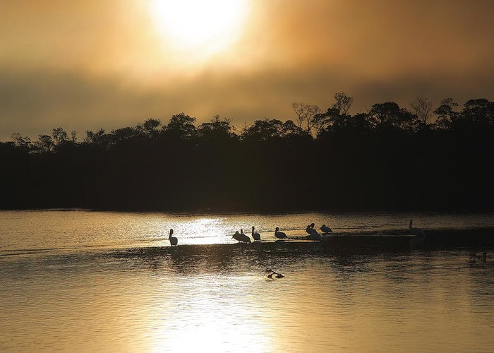 Wildlife Greeting Card featuring the photograph Golden Morning On Ding Darling by Steven Ainsworth