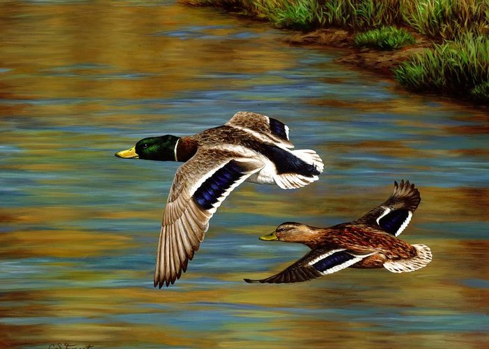 Duck Greeting Card featuring the painting Golden Pond by Crista Forest