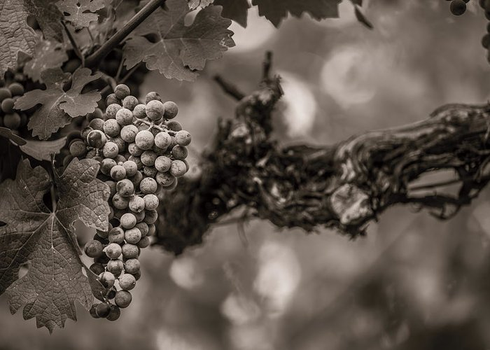 Fine Art Greeting Card featuring the photograph Grapes In Grey 1 by Clint Brewer