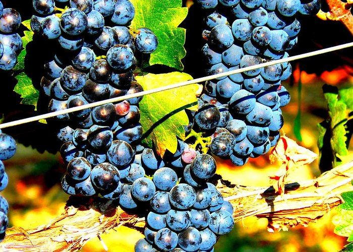 Grapes Greeting Card featuring the photograph Grapes On The Vine by Kay Gilley