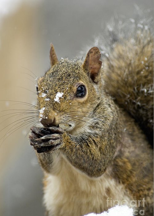 Eastern Greeting Card featuring the photograph Gray Squirrel - D008392 by Daniel Dempster