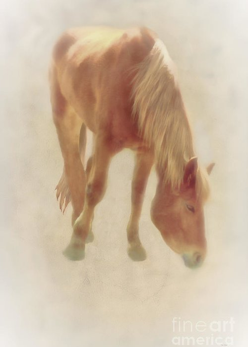 Animal Greeting Card featuring the photograph Grazing Time by Tom York Images