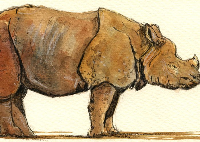 Rhino Greeting Card featuring the painting Greated One Horned Rhinoceros by Juan Bosco