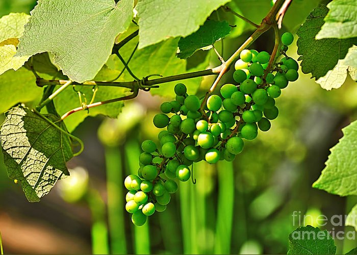 Photograhy Greeting Card featuring the photograph Green Berries by Kaye Menner
