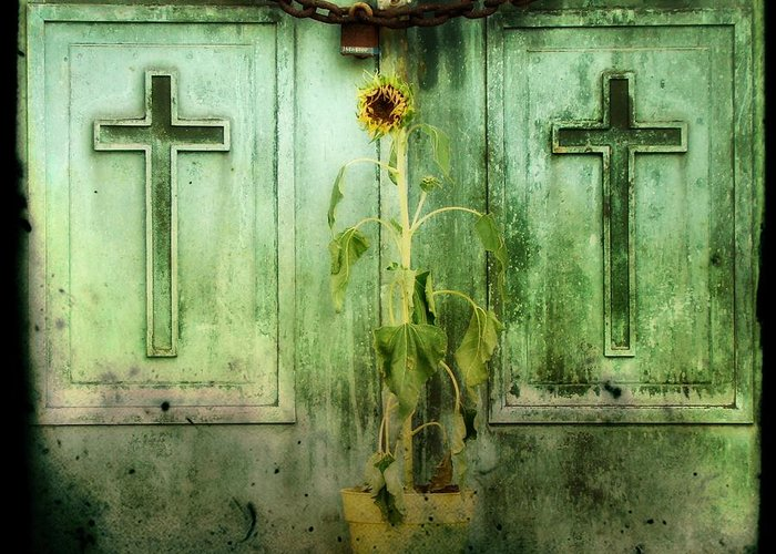 Old Sunflower Greeting Card featuring the photograph Green Doors by Gothicolors Donna