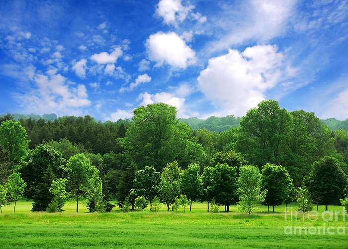 Tree Greeting Card featuring the photograph Green Forest by Elena Elisseeva
