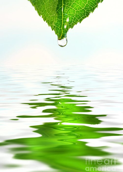 Background Greeting Card featuring the photograph Green Leaf Over Water Reflection by Sandra Cunningham