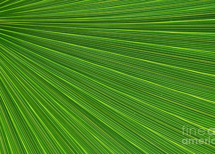 Palm Greeting Card featuring the photograph Green Palm Abstract by Kathleen Struckle