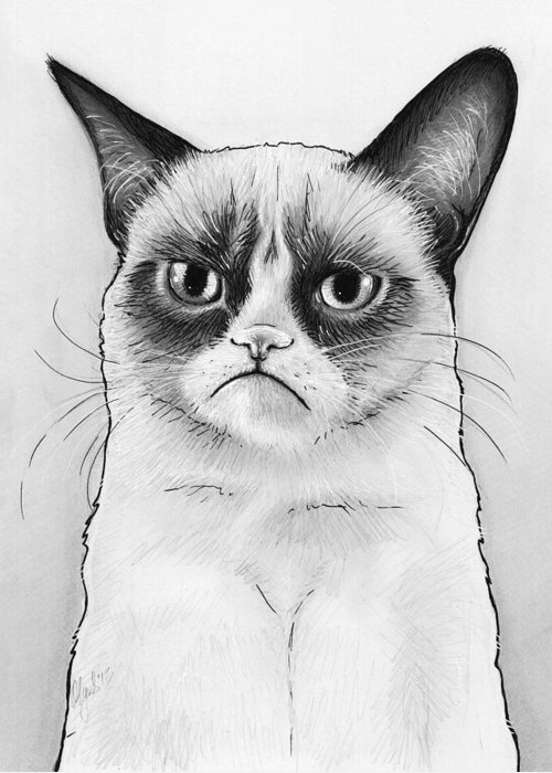 Grumpy Cat Greeting Card featuring the drawing Grumpy Cat Portrait by Olga Shvartsur