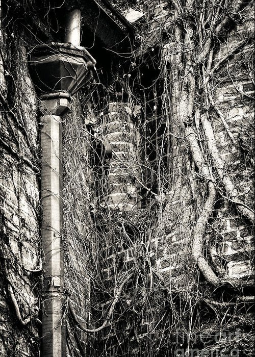 Gutter Pipe Greeting Card featuring the photograph Gutter Pipe by John Rizzuto