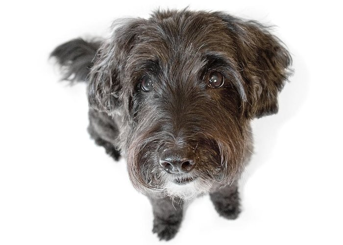 Dog Greeting Card featuring the photograph Hairy Dog Photographic Caricature by Natalie Kinnear