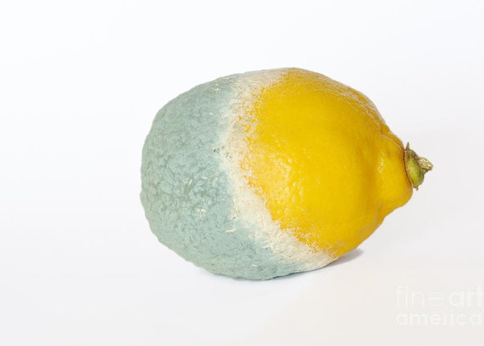 Food And Drink Greeting Card featuring the photograph Half Rotten Lemon by Sami Sarkis