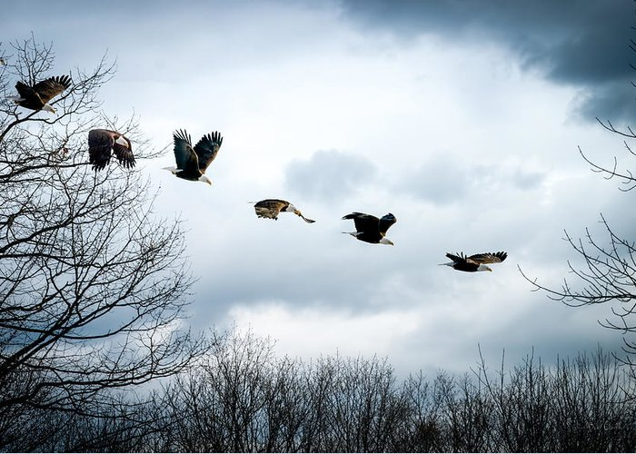 Eagle Greeting Card featuring the photograph Half Second Of Flight by Bob Orsillo