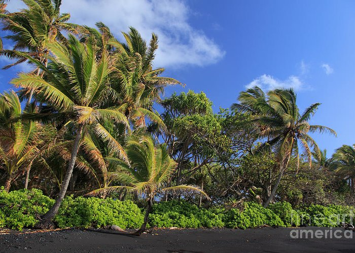 America Greeting Card featuring the photograph Hana Palm Tree Grove by Inge Johnsson
