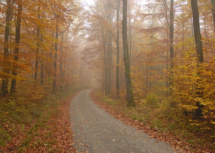 Fall Greeting Card featuring the photograph Hazy Forest In Autumn by Matthias Hauser