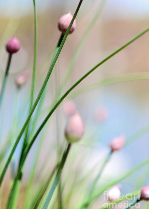 Herb Greeting Card featuring the photograph Herb Garden by Kim Fearheiley