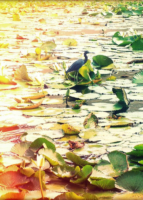 Florida Greeting Card featuring the photograph Heron Among Lillies Photography Light Leaks by Chris Andruskiewicz
