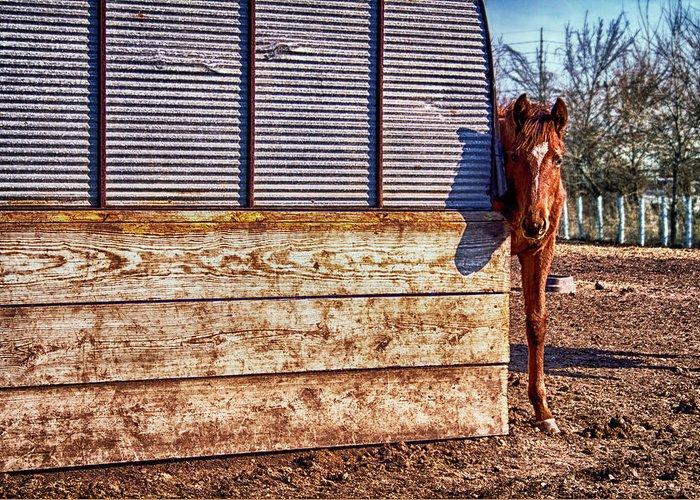 Horse Greeting Card featuring the photograph Hidden Horse by Ian Van Schepen