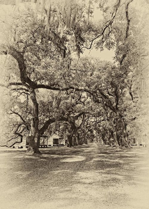 Evergreen Plantation Greeting Card featuring the photograph Historic Lane Antique Sepia by Steve Harrington