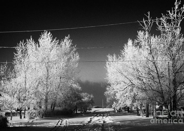 Hoar Greeting Card featuring the photograph hoar frost covered trees on street in small rural village of Forget Saskatchewan Canada by Joe Fox