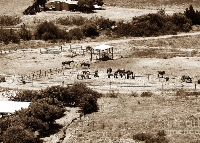 Horse Farm At Kourion Greeting Card featuring the photograph Horse Farm At Kourion by John Rizzuto