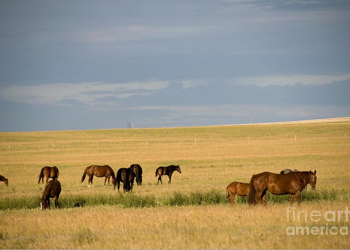 Saskatchewan Prairie Greeting Card featuring the photograph Horses In Saskatchewan by Mark Newman