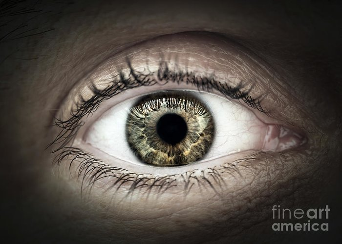 Eye Greeting Card featuring the photograph Human Eye Macro by Elena Elisseeva