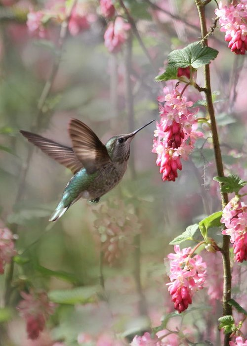 Animals Greeting Card featuring the photograph Hummingbird Heaven by Angie Vogel
