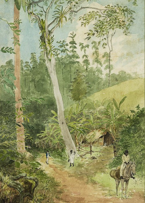 Watercolor Painting Greeting Card featuring the painting Hut In The Jungle Circa 1816 by Aged Pixel