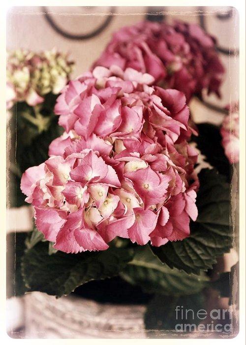 Hydrangea Greeting Card featuring the photograph Hydrangea On The Veranda by Carol Groenen