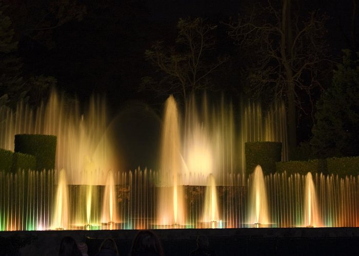 Illuminated Dancing Fountains Among Shrubbery Greeting Card featuring the photograph Illuminated Dancing Fountains by Sally Weigand