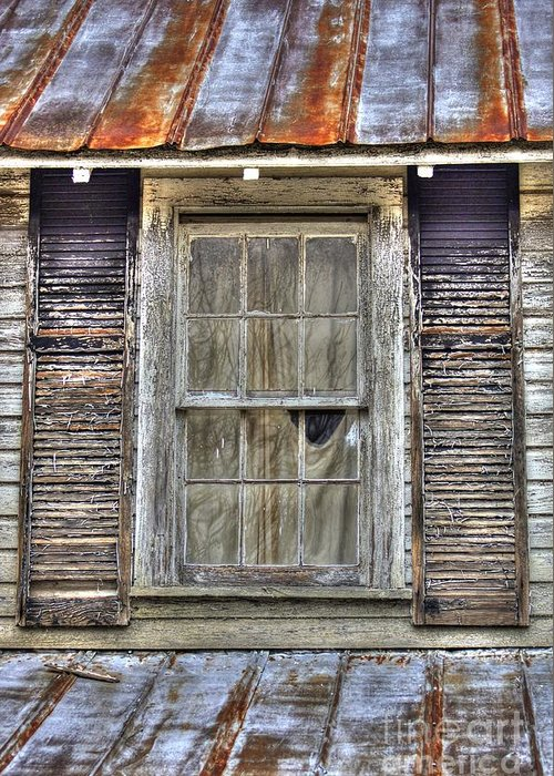 Rusted Tin Roof Greeting Card featuring the photograph I'm Watching You by Benanne Stiens
