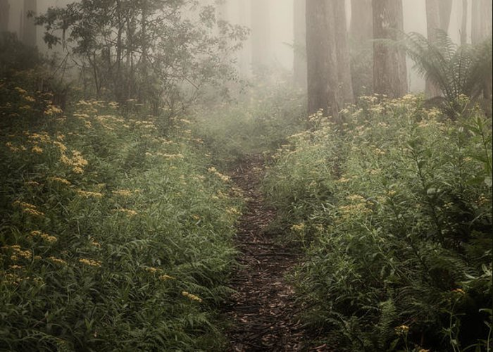 Fog Greeting Card featuring the photograph In Silence by Amy Weiss