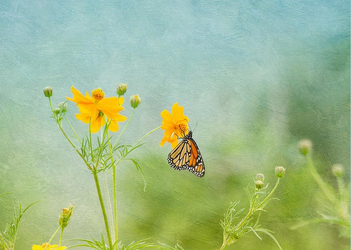 Nature Greeting Card featuring the photograph In The Garden - Monarch Butterfly by Kim Hojnacki