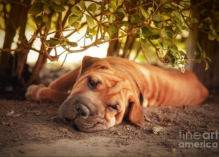 Dog Greeting Card featuring the photograph In The Shade by Jane Rix