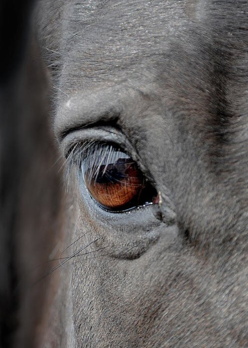 Horse Greeting Card featuring the photograph Into The Deep by Renee Forth-Fukumoto