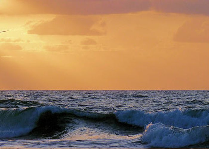 Atlantic Greeting Card featuring the photograph Into The Light by JC Findley