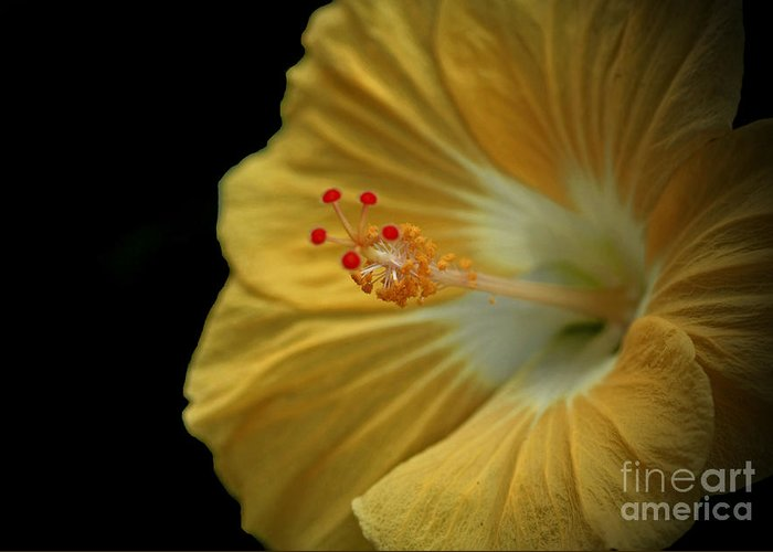 Invitation To Beauty Greeting Card featuring the photograph Invitation To Beauty Hibiscus Flower by Inspired Nature Photography Fine Art Photography