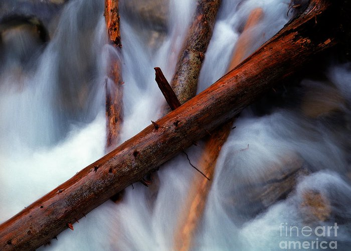 Beauty Creek Greeting Card featuring the photograph Jasper - Beauty Creek Logs by Terry Elniski