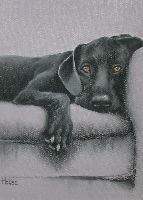 Black Greeting Card featuring the drawing Jasper by Cynthia House