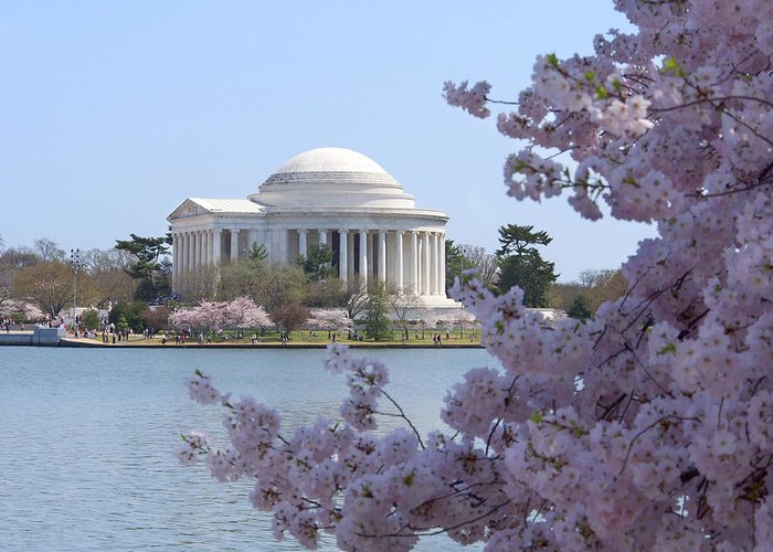 Landmarks Greeting Card featuring the photograph Jefferson Memorial - Cherry Blossoms by Mike McGlothlen