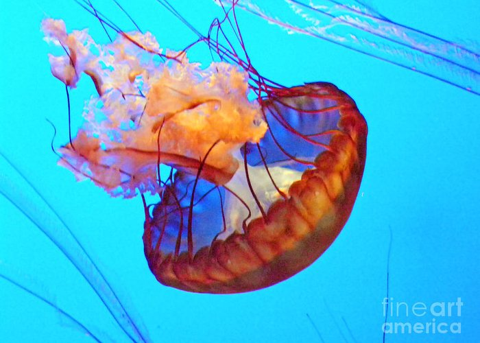 Art Greeting Card featuring the photograph Jellyfish Vii by Elizabeth Hoskinson
