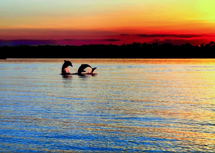Dolphins Greeting Card featuring the photograph Joy Of The Dance by Karen Wiles