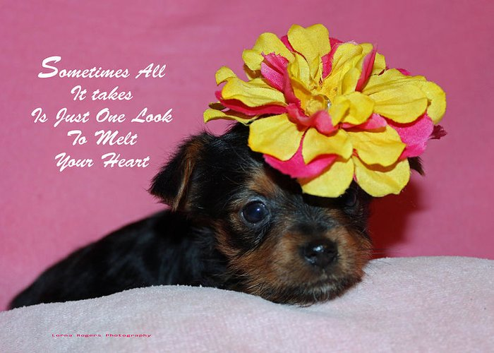 Puppy Greeting Card featuring the photograph Just One Look by Lorna Rogers Photography
