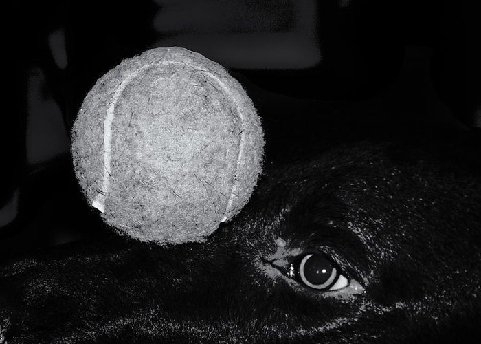 Dog Greeting Card featuring the photograph Keep Your Eye On The Ball by Roger Wedegis