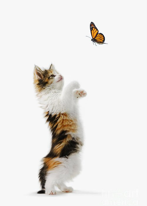 Active Greeting Card featuring the photograph Kitten And Monarch Butterfly by Wave Royalty Free