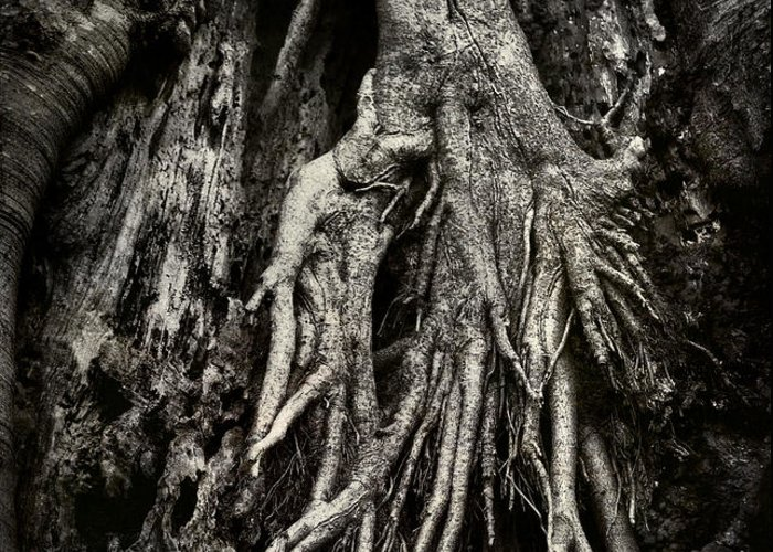 Tree Greeting Card featuring the photograph Kneeling At The Feet Of The Green Man by Rebecca Sherman